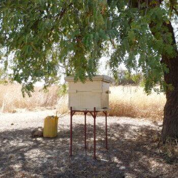 newTree – Les arbres pour la vie