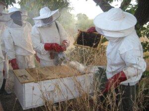 apiculture_imkerei_klein